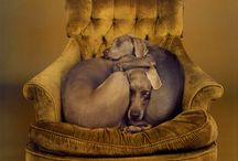 Weimaraner Love / by Tina Grady