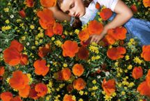 Favorites / by Fallon Mesaros