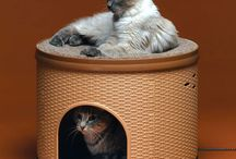 For the Kitties... / by Donna Cashion