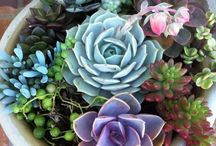 Succulent Plants / Different arrangements  / by Najat Hannawi-Medway
