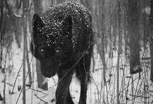 Pictures of wild animals / by Donna O'Connor