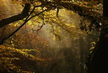 Nature / by Ashley Douglas