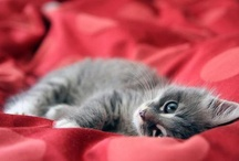 || Furry Friends || / cute little animals / by Monica  || Caravan of Style