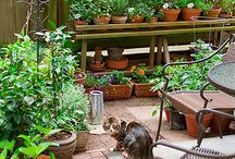 Gardening/Outdoor Life / by Dayna Beck