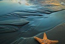 The Sea / by Carol Flores