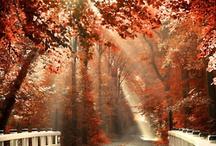 Autumn Magic / by Wendy Middleton