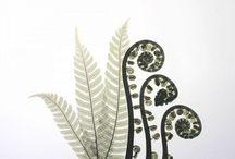 botanicals / by Colene Blanchet