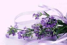 Lavender / by Elizabeth Andersen