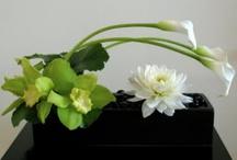 floral arrangements / by Judy Branton