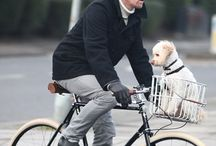 Dogs on Bikes (nice 'n safe) / by We Love Dogs ♥ Guide Dogs Worldwide ♥