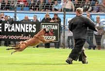 Politiehonden & blindegeleide honden / by Darline Dierckens