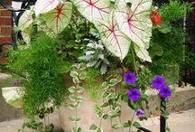 Gardening Ideas! / by Carole Wilson