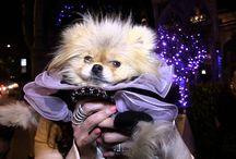 Celebrity Petz / Oh, fer cutez! / by TMZ