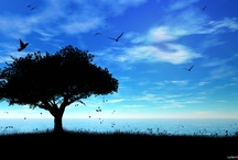 tree / by Conrad Sak