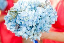 Blue Weddings / by LPA Weddings