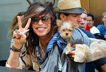 Celebs and their Yorkies / by Lucy's Luxuries