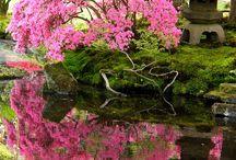 Japanese and Botanic Gardens / by Kathy Hopkins