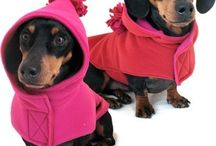 Doxies / Everything Dachshund / by Alice Schow Bowman