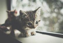 Cute kitty / by Lexie Dixon