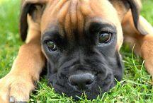 It's Puppy Love / by Michele Singer