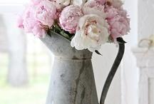 flowers / by Kathy Sloan Thacker