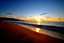 Seagulls at the Beach / by Sharon Polosino
