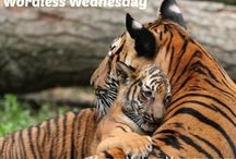Wordless Wednesdays / Say it with a picture. Adorable animal pics and more. / by MoneyMakingMommy.com