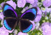 Butterflies & Insects / by Debbie Beals