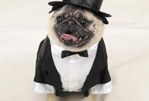 Dogs in Costume / by Woundwear Woundwear