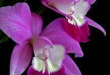 Flores... / by Andreia Spanholi