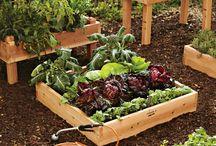 gardening / by Dian Decker