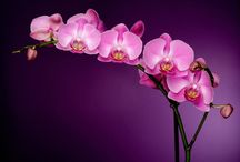 Orchids / by Maggie Lim