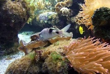 Aquariums / by Edrie Crisp