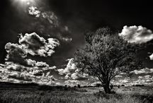 Heavenliness Abounds- Black and White / by Amie