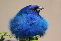 photography birds / by Tom-Pat Enteman