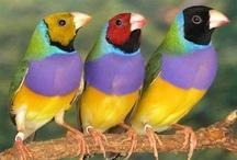 Birds (Pets & Wild) / by Pieter Smith