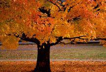 Fall <3 / by Elizabeth Curley