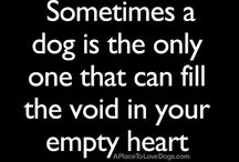 Pet Quotes and Messages / by Quotes and Messages