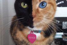 Kitties! / by Julia Morgen