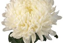 Floral Design  / by Glenda Johnson