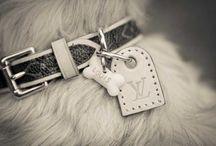 Bella / Our furry Lambo! / by Lauren Lamson