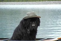 I heart Newfies!!! / by Michelle Moschke