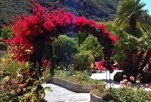 Ischia Thermea and SPA / by Hotel Ape Regina Ischia