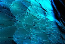 Blue / by Julia Castro Christiansen
