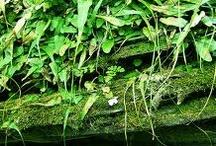 Ferns, Mosses & Liverworts / by Clara A