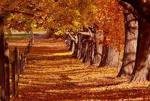 Beautiful places / by Sandra Rummel