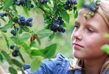 Green Living & Environmentalism / by MindBodyGreen