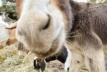 donkeys / by Judy LeGrand
