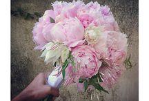 Wedding Flowers / by Cassandra Lynne