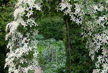 Garden / by Nicola Marriott